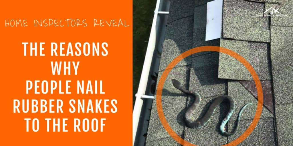 snake on the roof